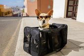 Dog In Transport Box Or Bag Ready To Travel poster