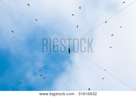 Kettle Of Broad-winged Hawks During The Autumn Migration