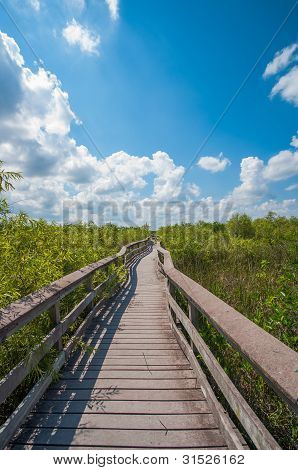 A boardwalk in the Everglades