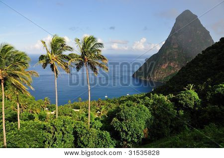 Piton by the sea