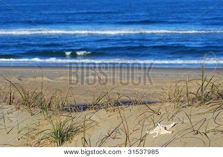 Ocean Front Scenic