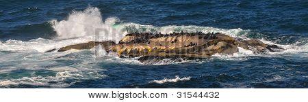 Waves Crashing Over Cape Fur Seals