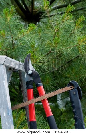 Tree Trimming Tools