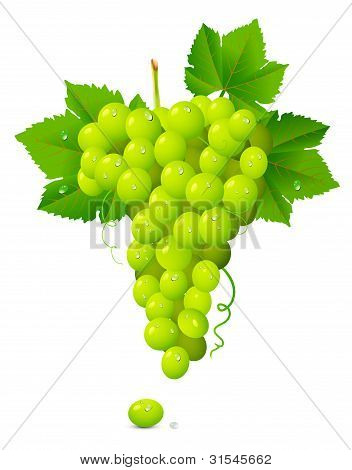 White Grape Cluster