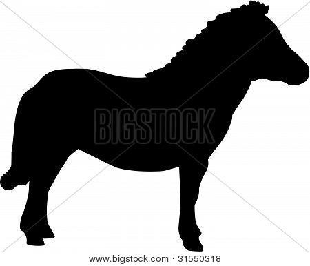Mini Shetland Pony