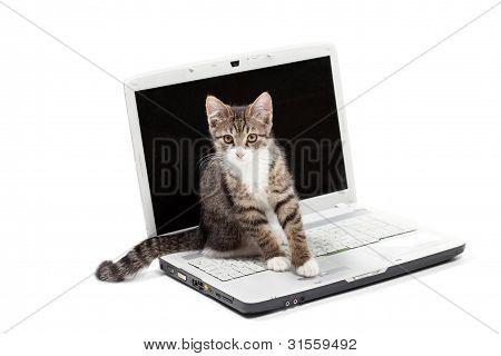 Ordenador portátil y gatito atigrado