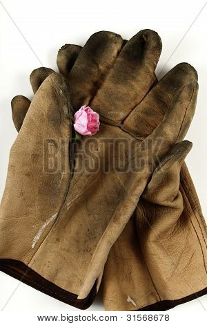 Worn Leather Work Gloves And A Pink Rose