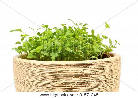 Spring Vegetable In Ceramic Pot On A White