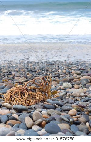 Beach Concept, Stones And Coral
