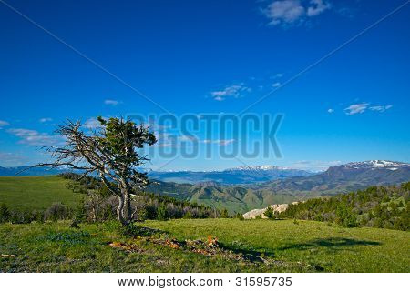Lone Tree On A Mountain Meadow