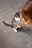 Homeless Animals. Abandoned Kittens Begging For Food On The Terrace Of The Restaurant. Animal Welfar poster