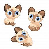 Siamese Kittens Cat Kitten Cats Cartoon  Illustration Vector poster