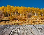Aspen grove at autumn in Rocky Mountain National Park. Colorado, USA.  poster