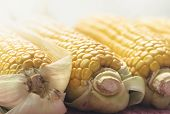 Corn Closeup Food Background Healthy Food. Vegetarian Food. Nutritious Food. Vegetable Food. Food. C poster