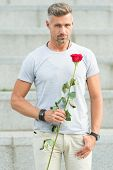 The Celebration Of The Special Holiday. Handsome Man Holding Red Rose For Holiday Celebrating. Cauca poster