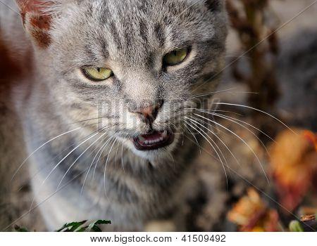 Cat's Portret