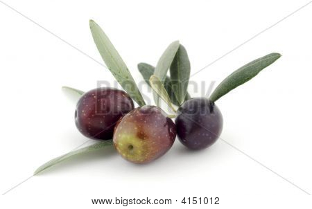 Olives And Leaves