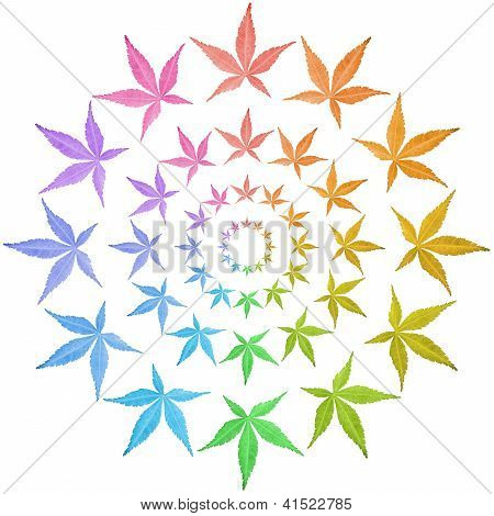 Circles Of Colorful Leaves Isolated On White.