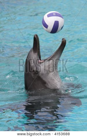Dolphin Ball Game
