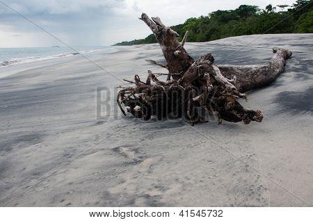 Beach and wood