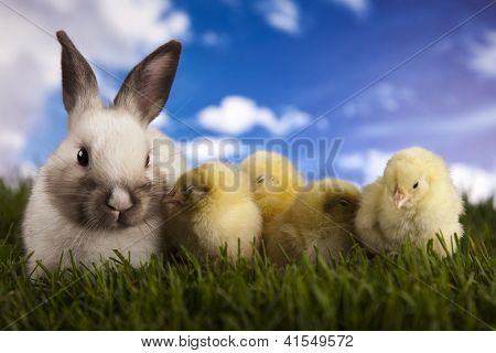 Chick in bunny