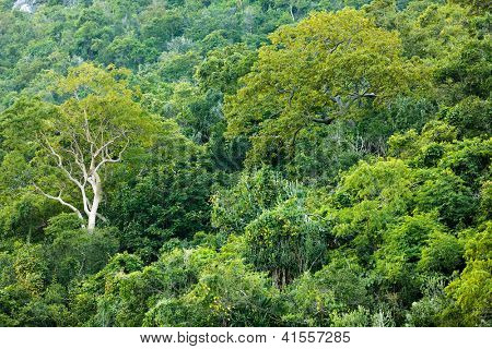 Tropical dense forest on shore, Sam Roi Yot, Thailand