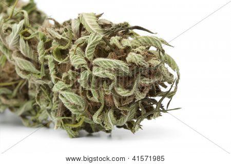 Dried marijuana bud with visible THC on white background