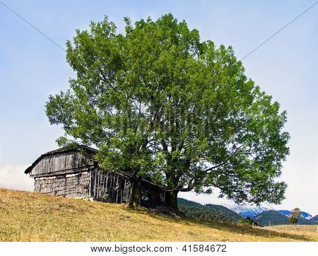 Abandoned Old House In Carpathians