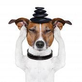 stock photo of dog eye  - dog meditates with hot stones on top - JPG