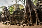 Huge Banyan tree roots entangling Ta Promh temple walls, Angkor, Cambodia