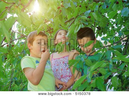 Children Eating Bing Cherries