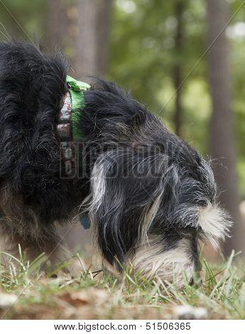 Dog At Park