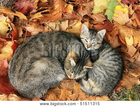 Two Cats In Autumn Leave