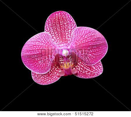 orchids on a black background