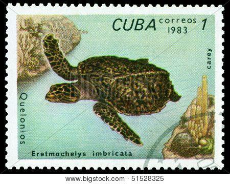 Vintage  Postage Stamp. Eretmochelys Imbricata.
