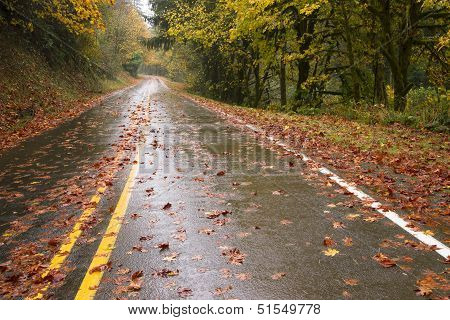 Wet Rainy Autumn Day Leaves Fall Two Lane Highway Travel