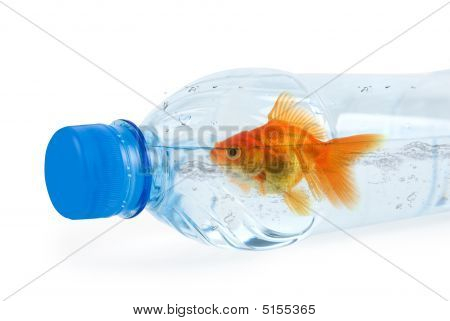 Bottle And Gold Fish