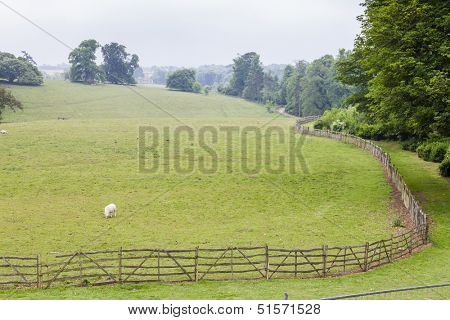 landscape with sheep, Stowe, Buckinghamshire, England