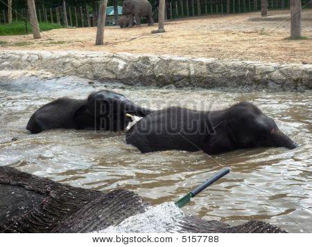 Malaysia Elephant