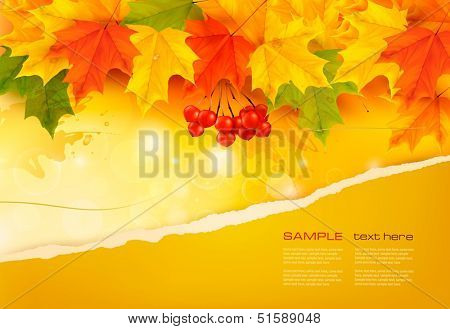 Autumn background with colorful leaves and ripped paper. Vector illustration.