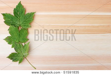 Three Green Sycamore Leaves On A Wooden Background