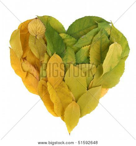 Bright autumn leaves lie in shape of heart isolated on white