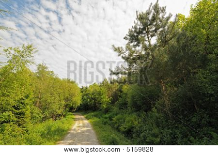 Altocumulus Clouds Over A Track Through A Mixed Wood.