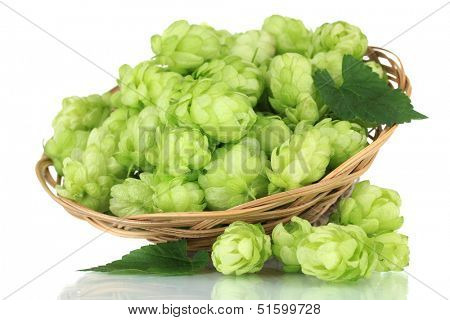 Fresh green hops in wicker basket, isolated on white