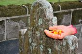 picture of prank  - A prank Halloween severed hand offers candy corn from the grave - JPG