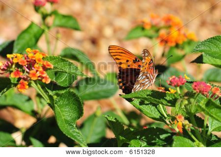 Botanical Garden Huntsville Oleta Orange Day  Two 092009 269 Crop