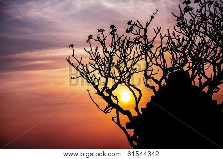 Ruins And Tree Silhouette In Hampi