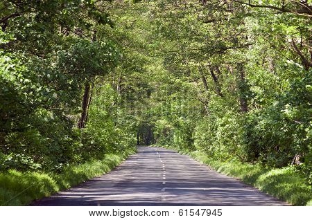 Empty Country Road In Tree Tunel