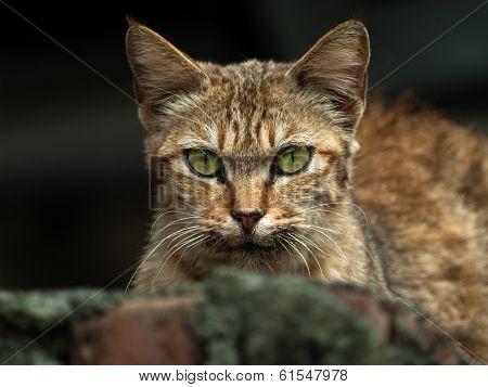 cat in wild