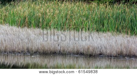 Oil Painting Stylized Photo Of Levels Of Water Vegetation At The Shore Of A Lake: Yellow Grass And G